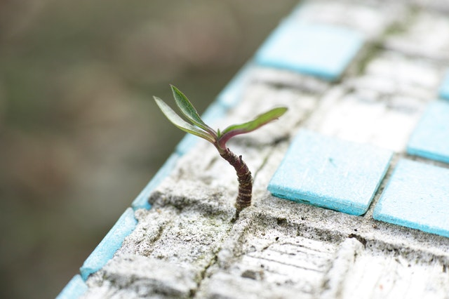 survive or thrive  overqualified a matter of management plant growing through bricks