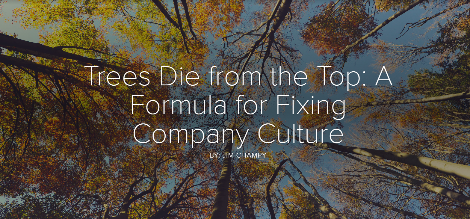 Trees Die from the Top: A Formula for Fixing Company Culture