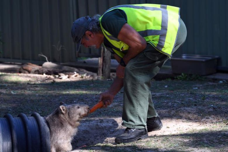 Australian prison provides rehab for inmates and wildlife