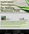 Cultivation Techniques for Gaining Maximum Yield