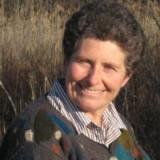 Harriet Strimpel