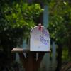 mailbox thumb