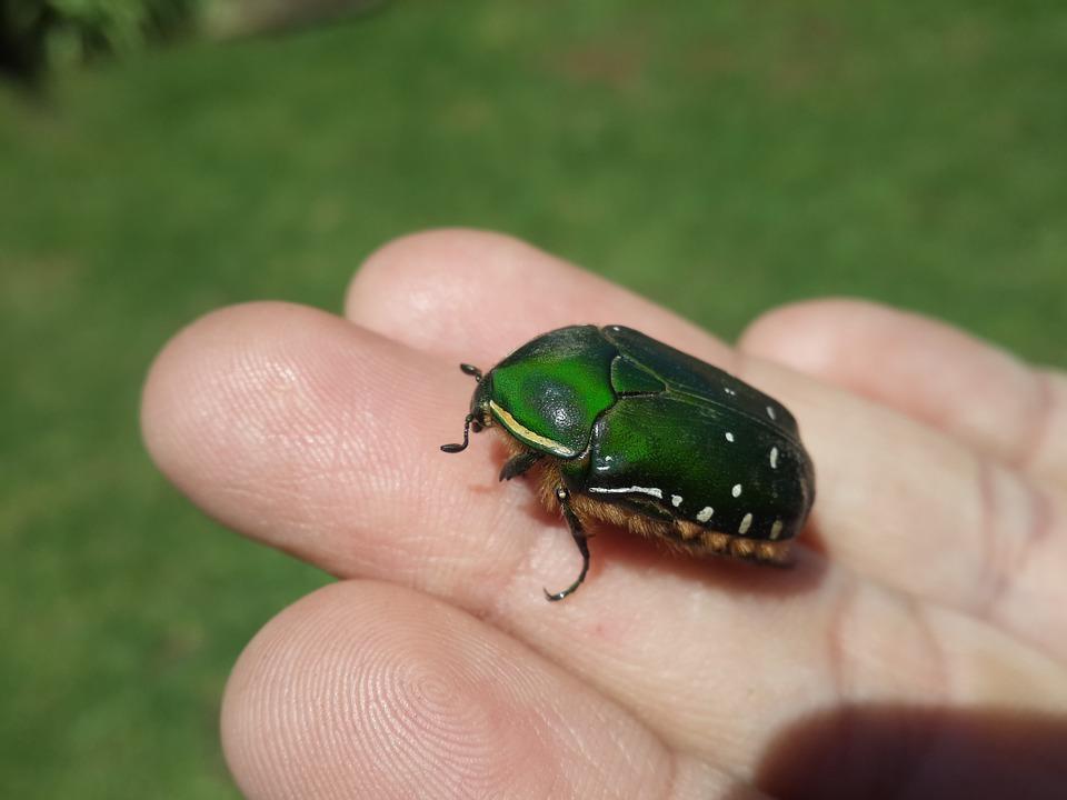armoured-bug
