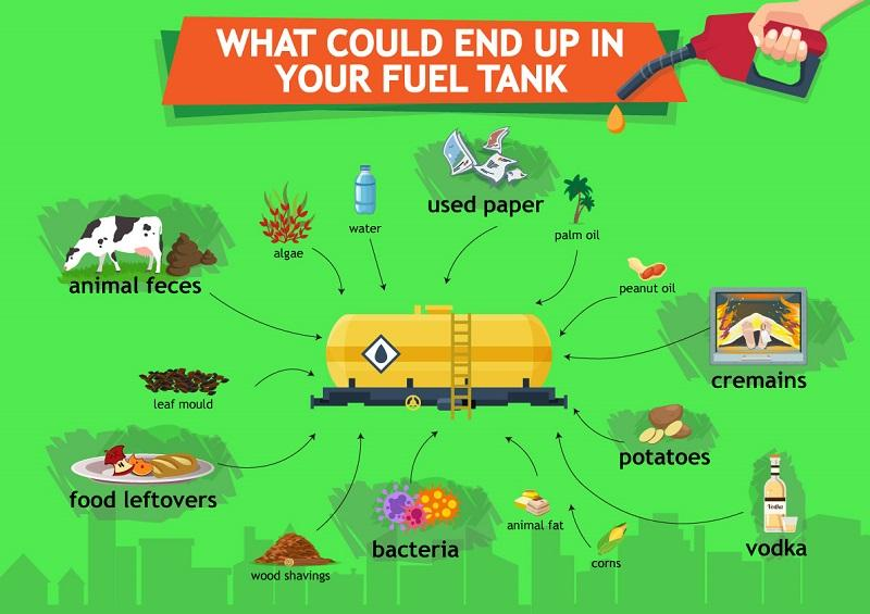biofuel ingredients