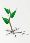 survive-business-process-management